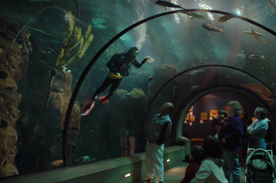 Oregon Coast Aquarium - Oregon Coast Aquarium