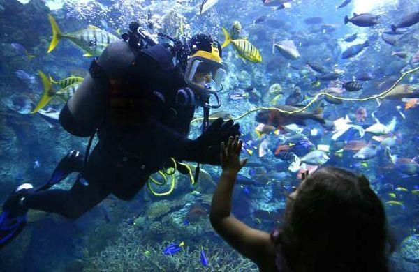 Aquarium of the Pacific - Aquarium of the Pacific
