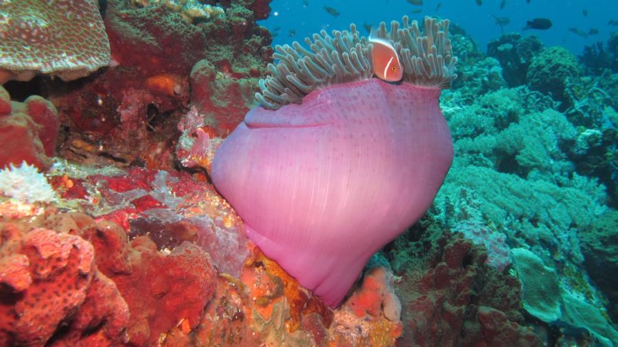 Verde Island, Philippines - Amenome