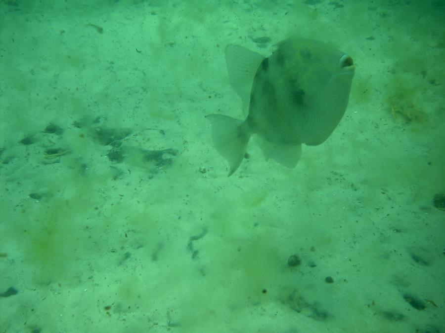 Navarre Marine Sanctuary - Fish