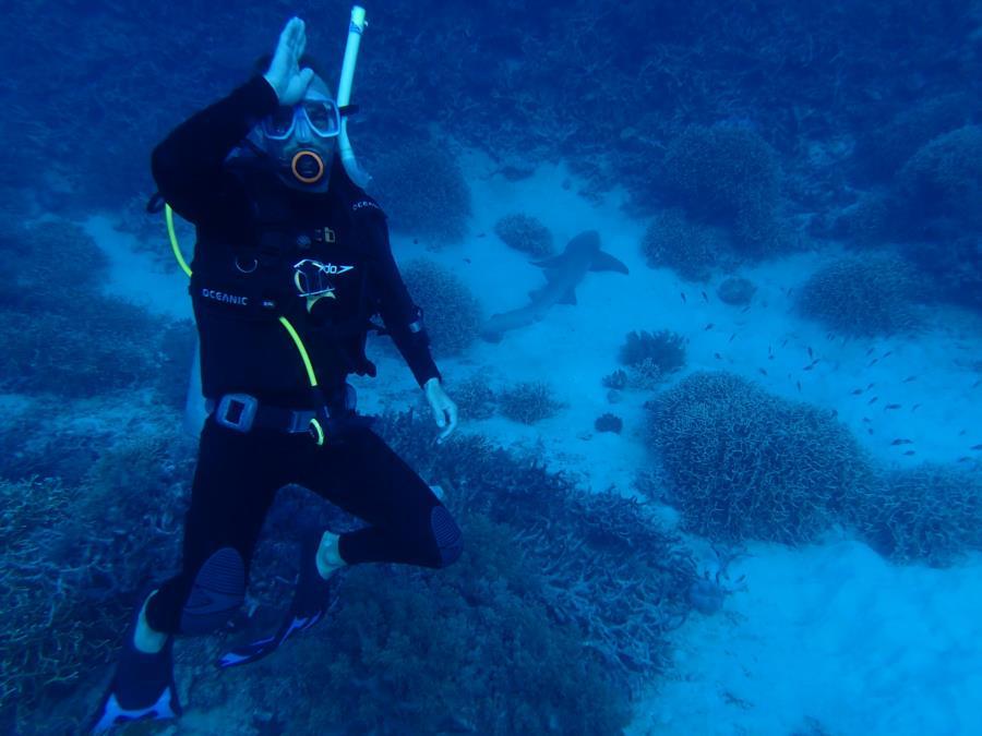 Thetford Reef - Lazy Shark