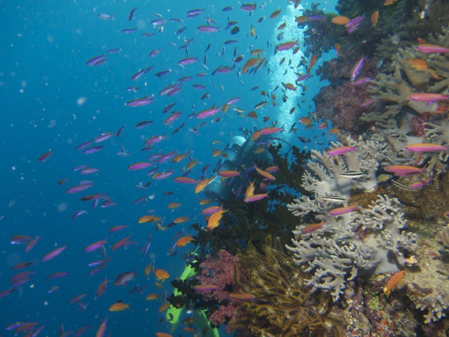 Chimneys, Namena Marine Reserve, Fiji - fish
