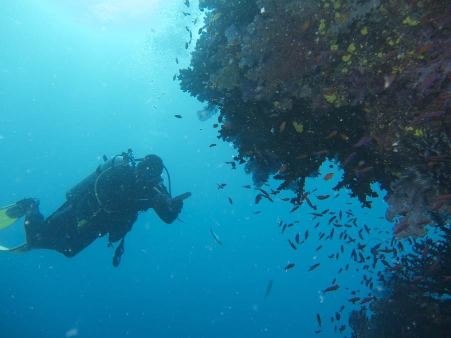 Chimneys, Namena Marine Reserve, Fiji - diver 1