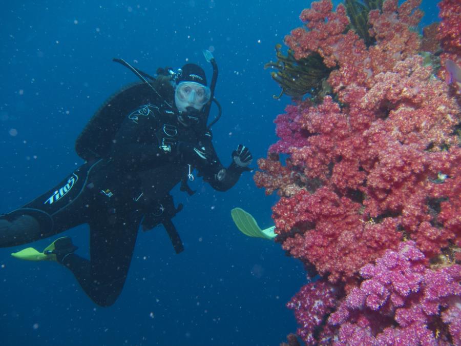Chimneys, Namena Marine Reserve, Fiji - diver 2