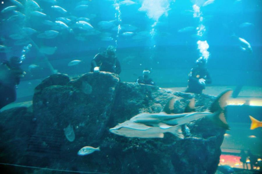 Dubai Aquarium - Dubai Aquarium break to watch the fish