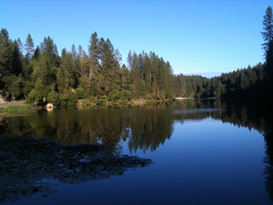 Lake Madrone - From the Dam looking back over the lake