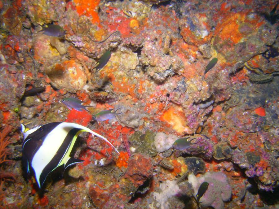 Kon Phi Phi Island - Fish