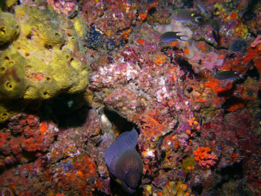 Kon Phi Phi Island - Gray Eel