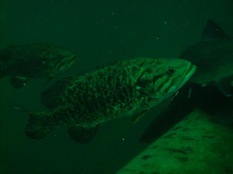Gilboa Quarry - Gilboa Fish
