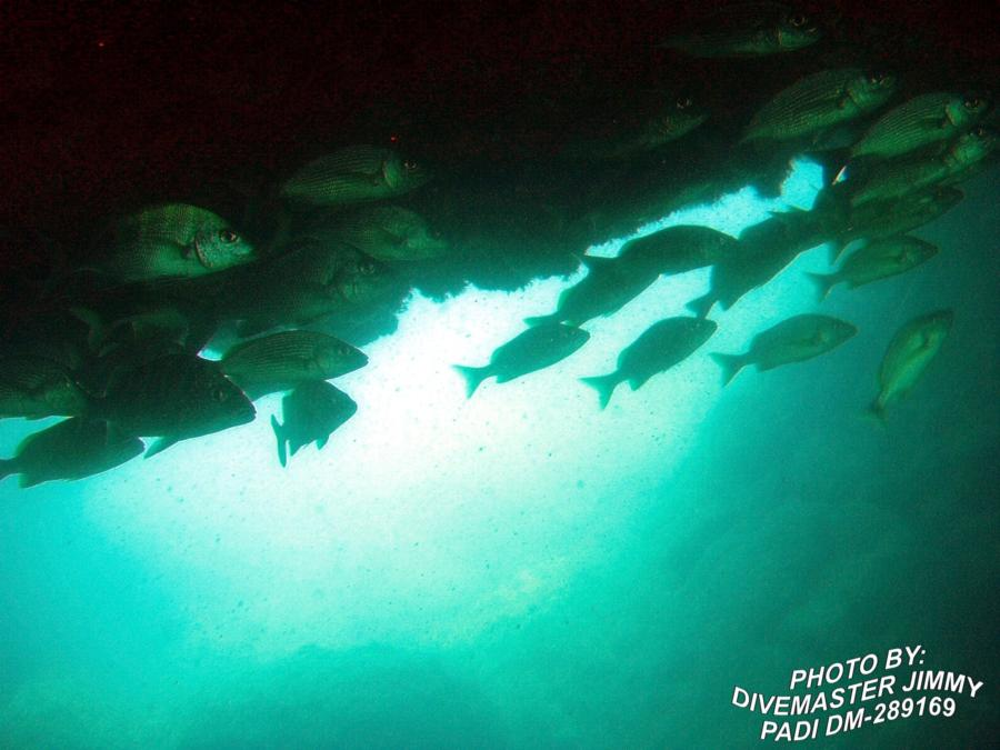 Martini Cove - Spotted Tailed Striped Sea Bass and a Graybar Grunt or 2