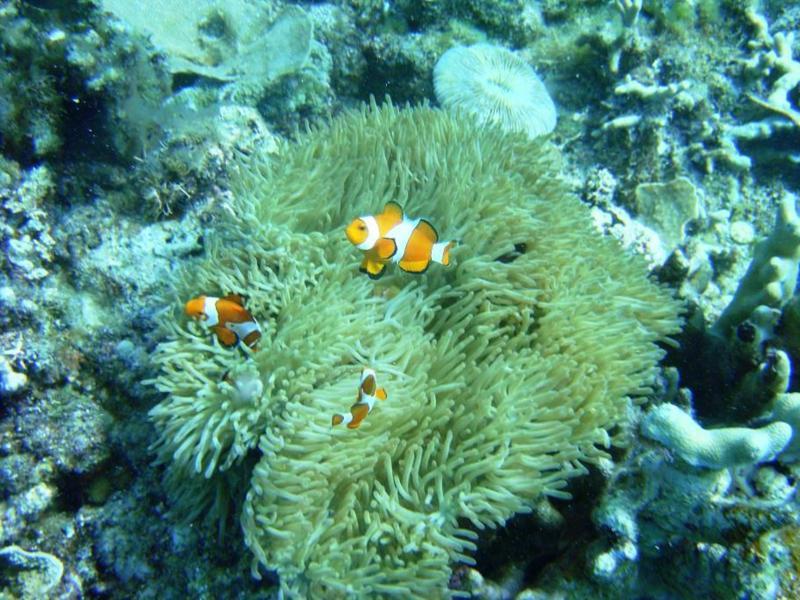 Anini-y - Nemo