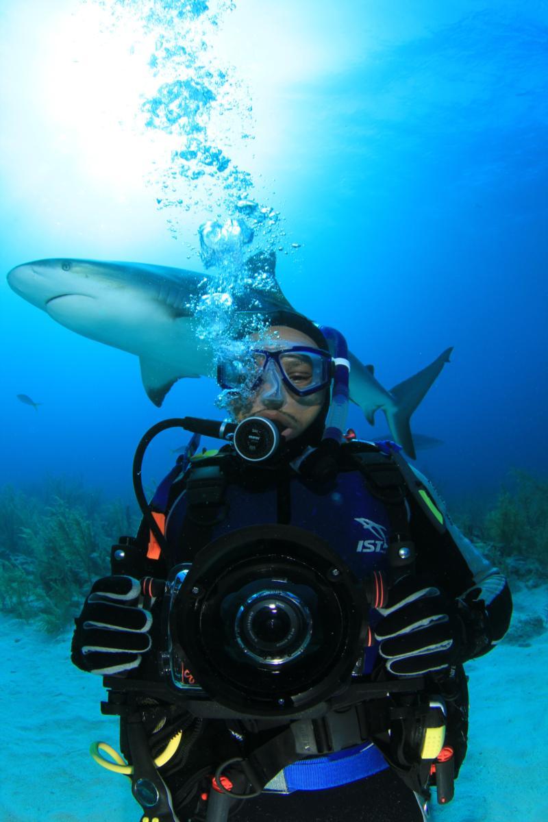 shark dive in the bahamas