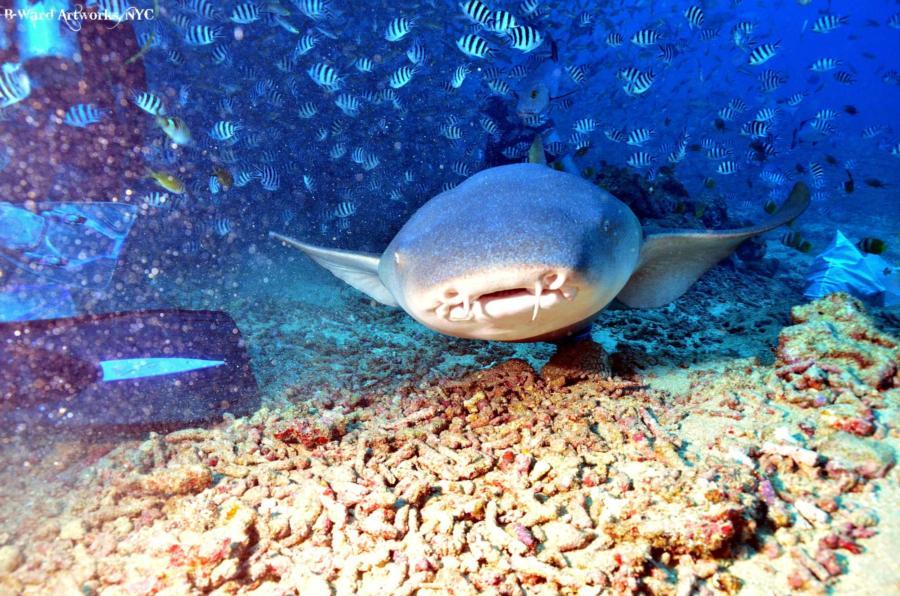 Shark Dive Fiji
