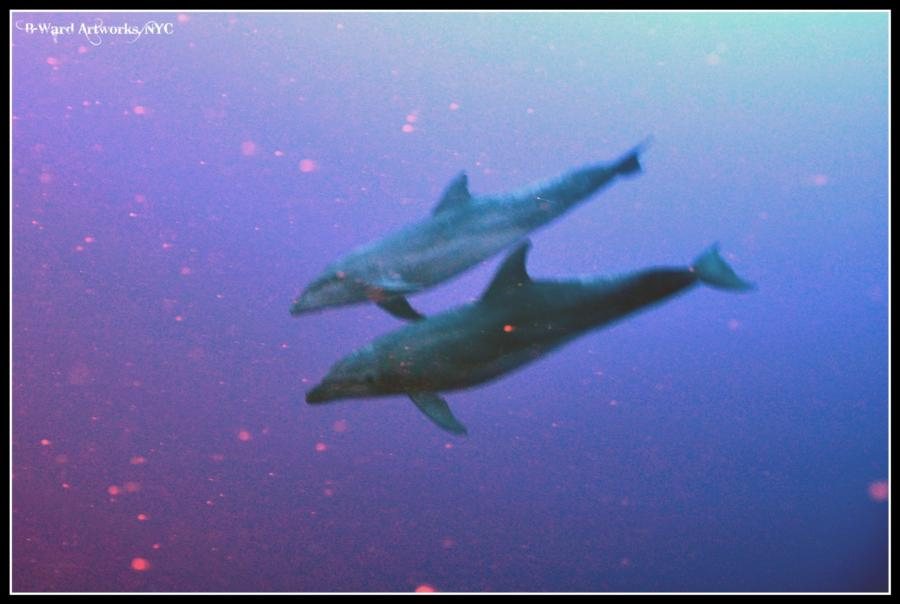 Shark Dive Bora Bora (Tahiti)