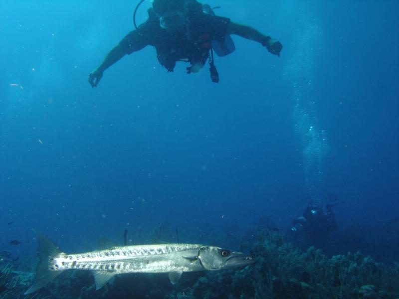 Barracuda Cay Sal Bank AUG 06