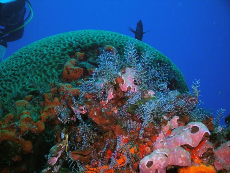Bright coral (Cozumel)
