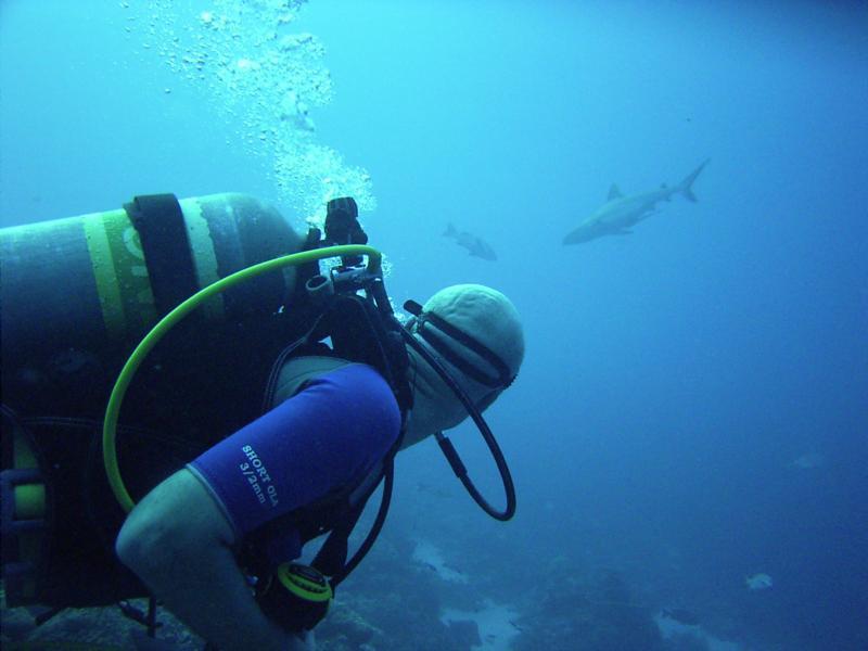 Shark in Palau