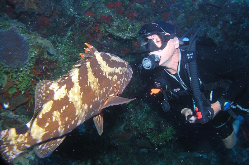 kissing grouper