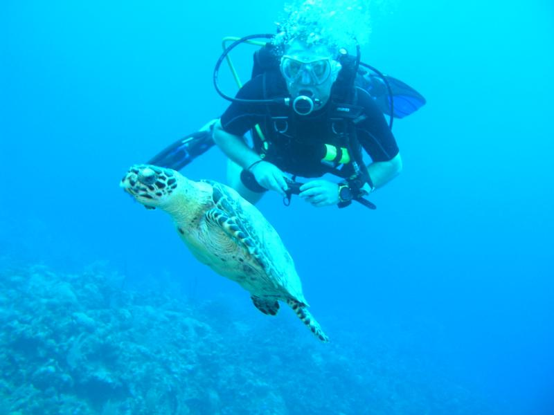 Turtle going for air, Cayman 3/2010