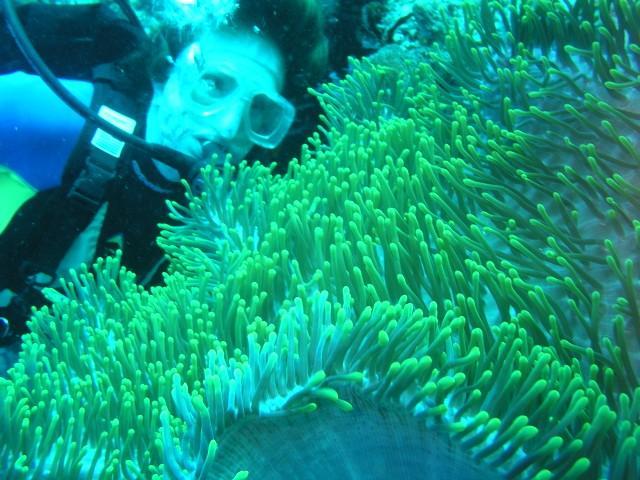BIG anemone, where's Nemo! Bali