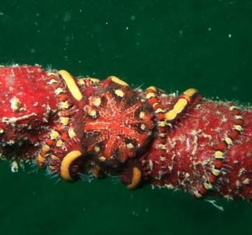 looks like a worm or snake,but its actually a Brittle Star