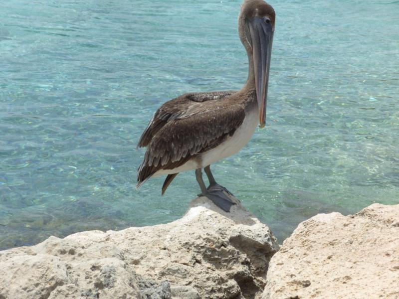 Bonaire Memories :)