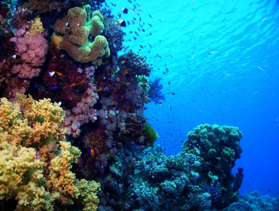 Straits of Tiran: Reefscape