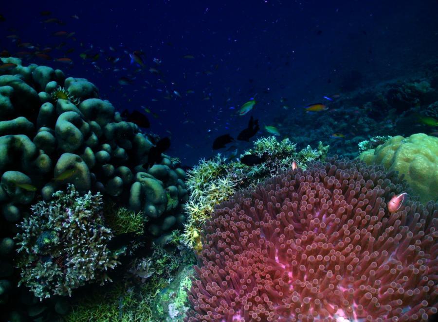 Bunaken Island: Reefscape