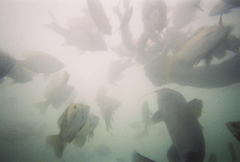 Feeding fish at Joe's Place (Medina Lake)