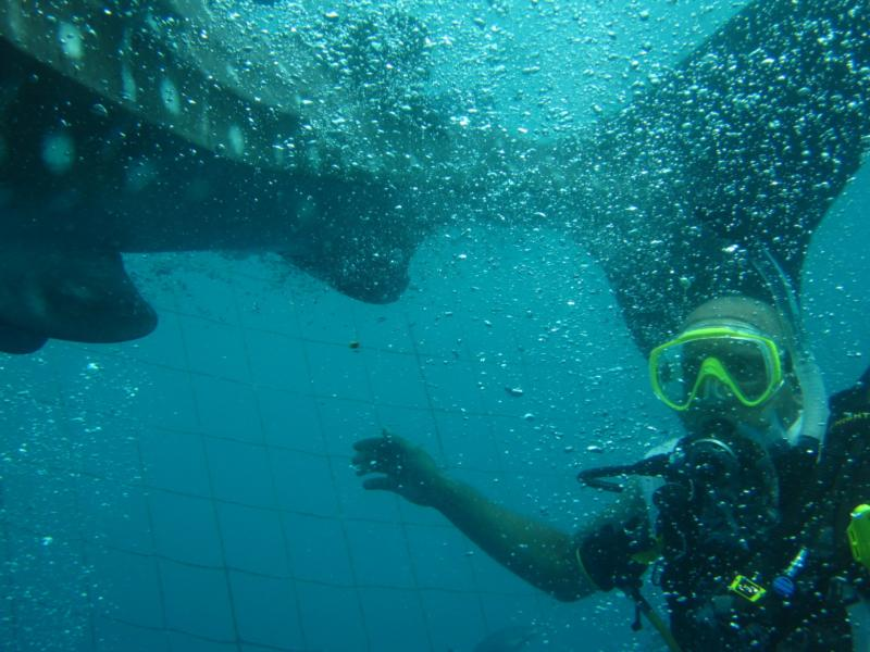Me and a WhaleShark