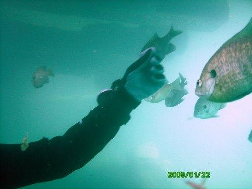me teasing the fish @ pelham