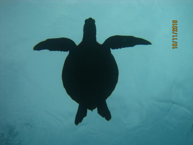 silhoutted turtle