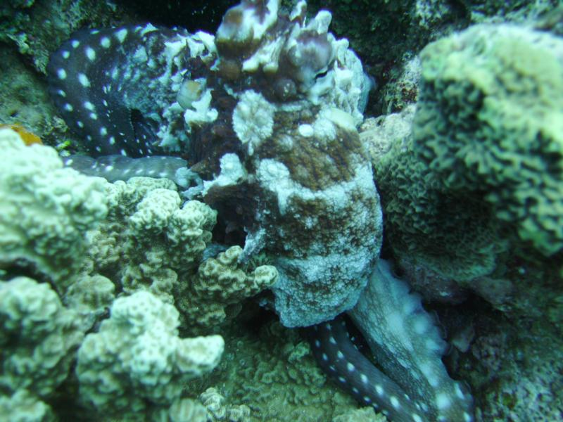 Veki's Reef - Octopus - 29 May