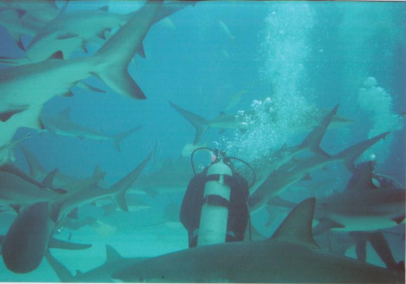 Bahamas Shark Feeding Dive