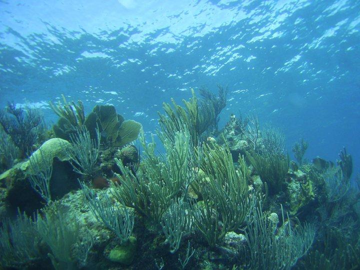 Bermuda Shallow Reef
