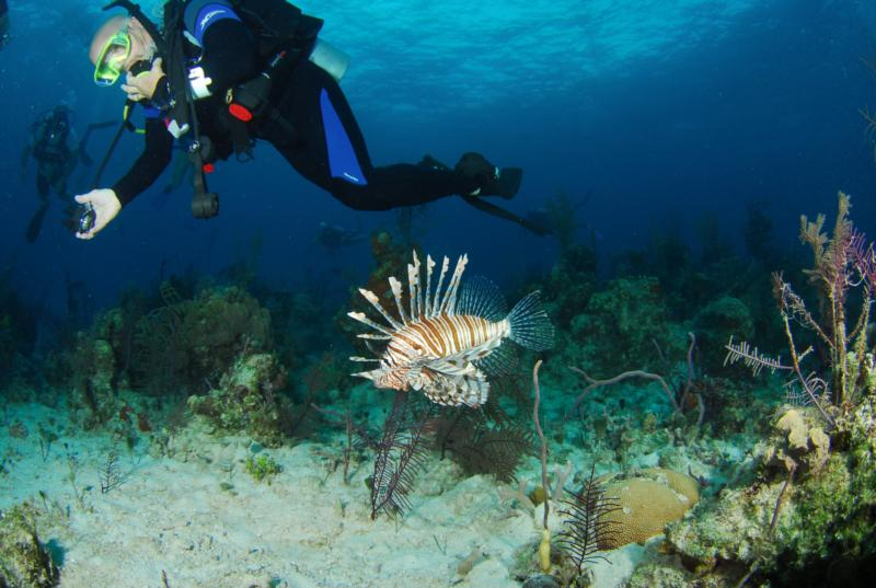 There's a Lion Fish problem?
