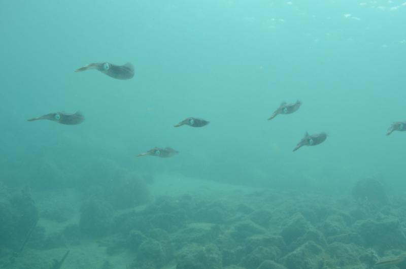 School of squid - blue heron blvd bridge