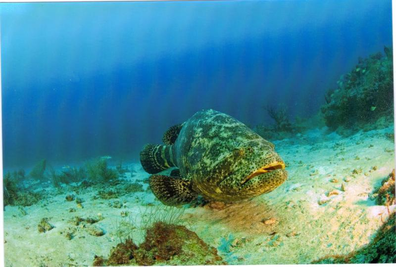 Ron's Reef, West Palm Florida
