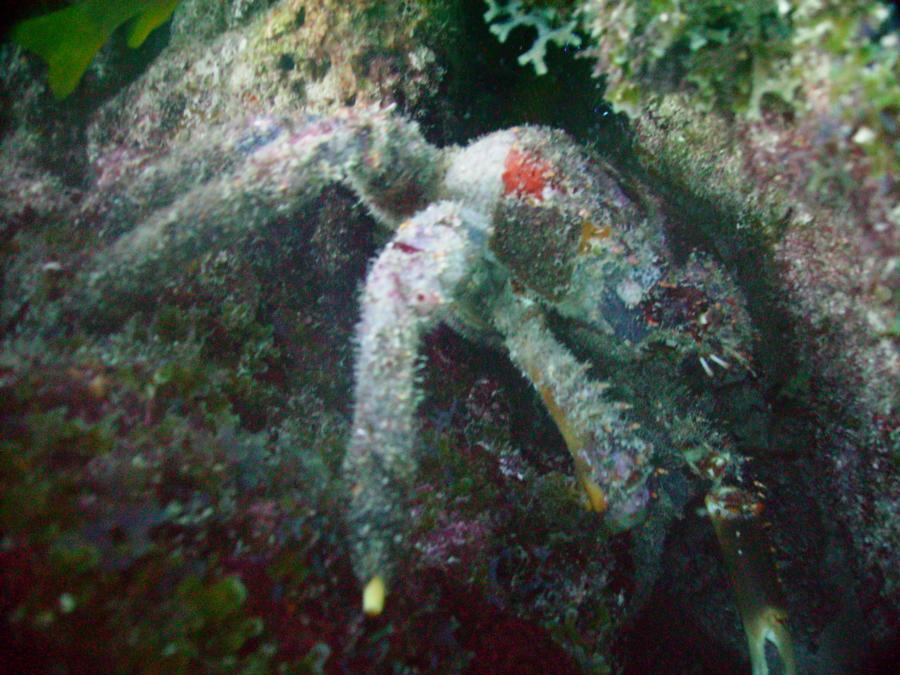 2008 Keylargo crabby