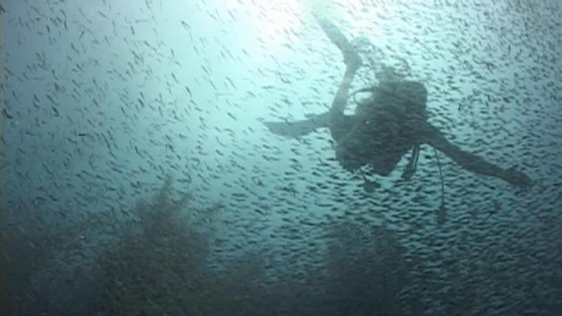 """Minnow """"bait ball"""" really neat being inside it - Belize"""