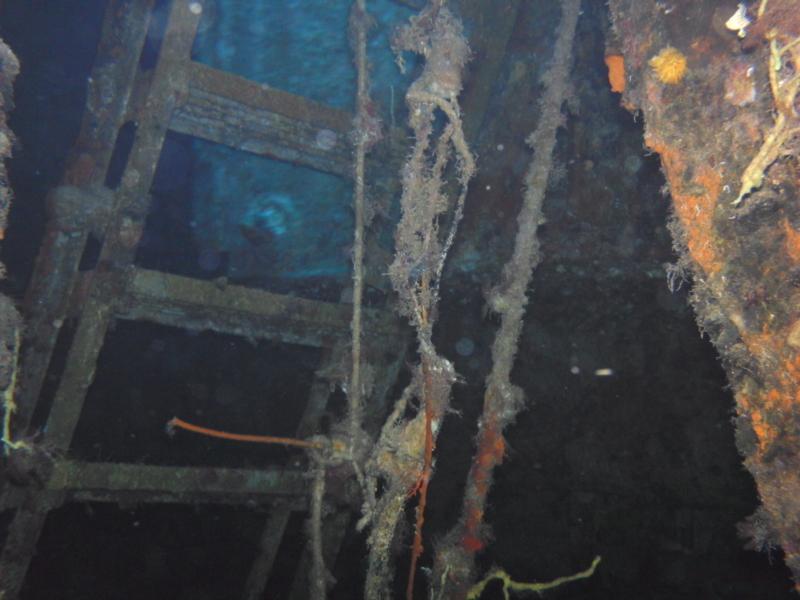 Inside the C53 shipwreck in Cozumel