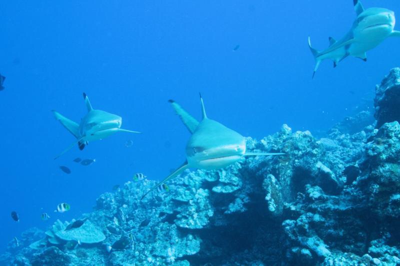 Three Sharks pose for the shot... hehehe