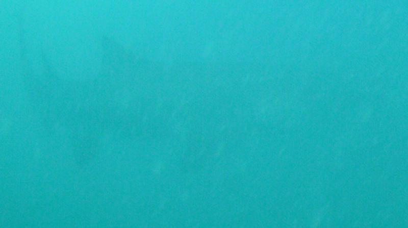 Little but my first shark
