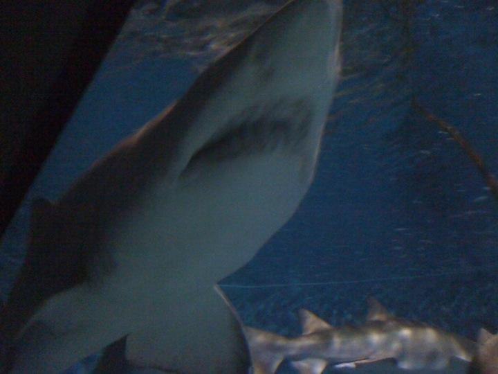 Maratime Aquarium Norwalk CT