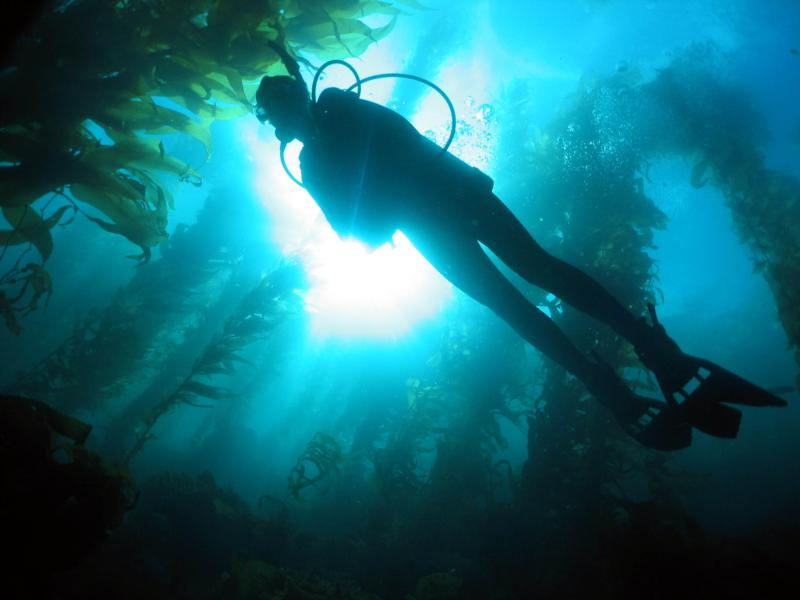 Diving in Catalina Kelp Forest