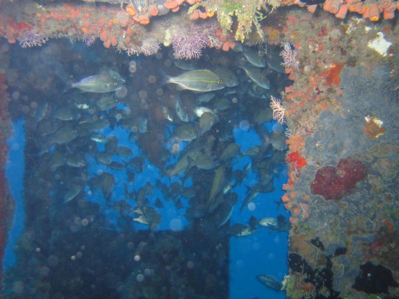 Diving a Wrech 36mettres