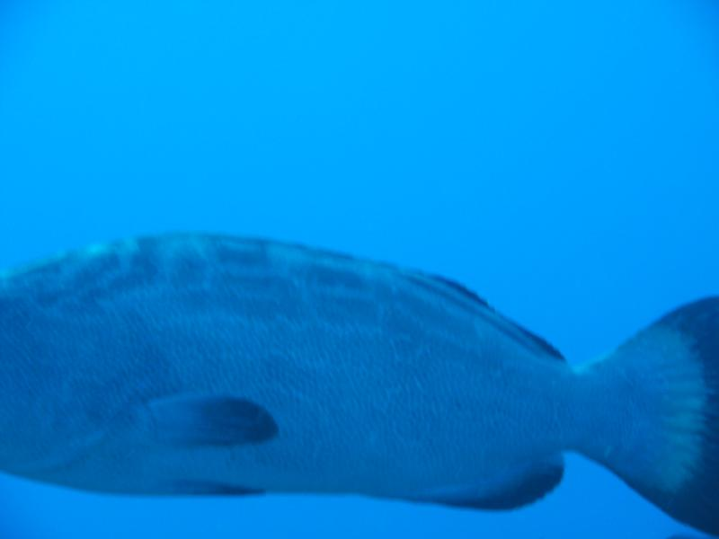 I'd make a great photographer wouldn't I? (larer than it looks Grouper)
