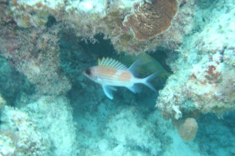 Squirell Fish, White Hole, Great Guana Cay