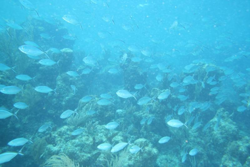 The Mob flowing over the reef @ the Tunnels Fowl Cay Preserve, Abaco, Bahamas