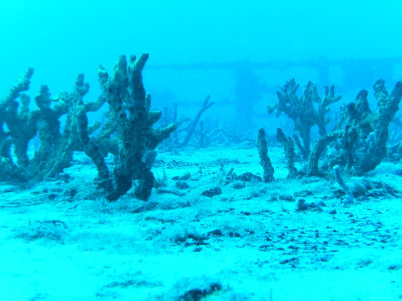 Spiegel Grove Wreck - Key Largo - 136'